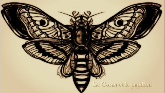papillon_14083